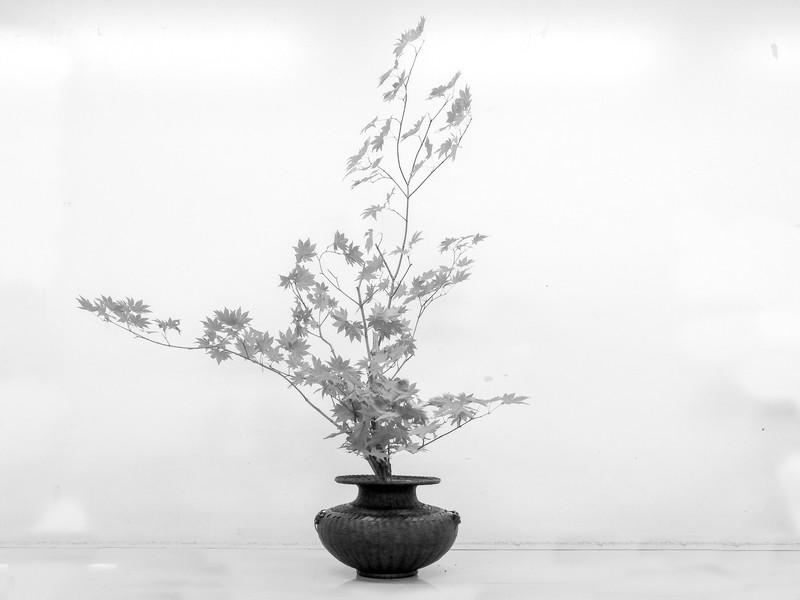 日本の伝統、「池坊いけばな」レッスンの画像