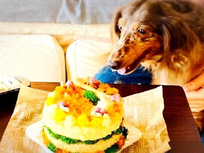 【犬用ケーキ】手作り「わんこケーキ」講座120分の画像