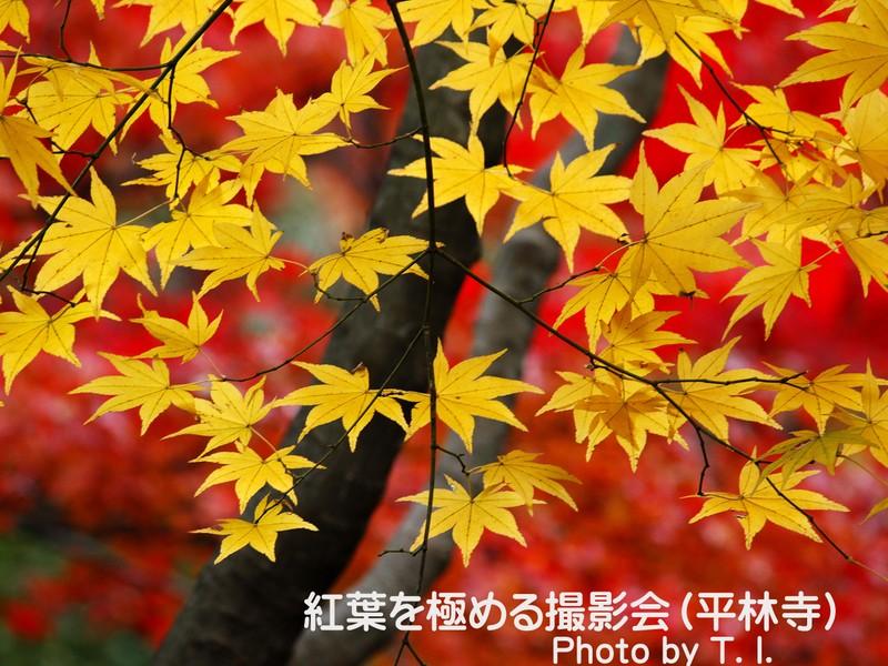 〔平林寺〕紅葉を極める撮影会《初心者向き》の画像