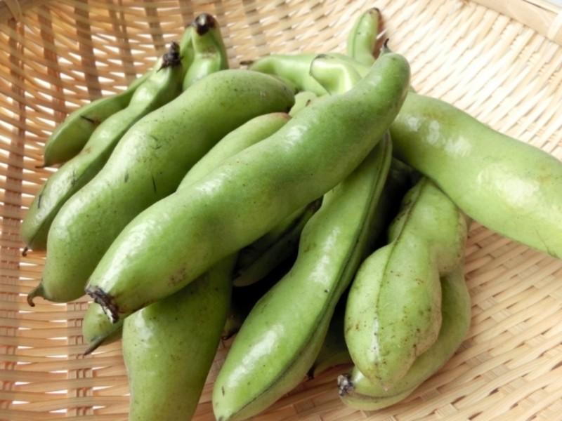 オンライン:【無農薬そら豆で作る豆板醤】※季節限定講座の画像