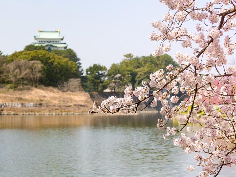 明るくて!素敵な写真を撮ってみよう in 名古屋の画像