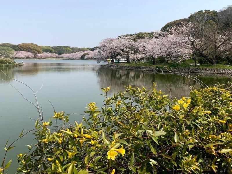明石公園☆青空ウォーキングマンツーマンレッスン!の画像
