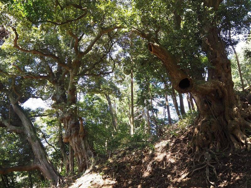 【オンライン】森林浴気功、森にいる気分で深呼吸、ストレスを解き放つの画像