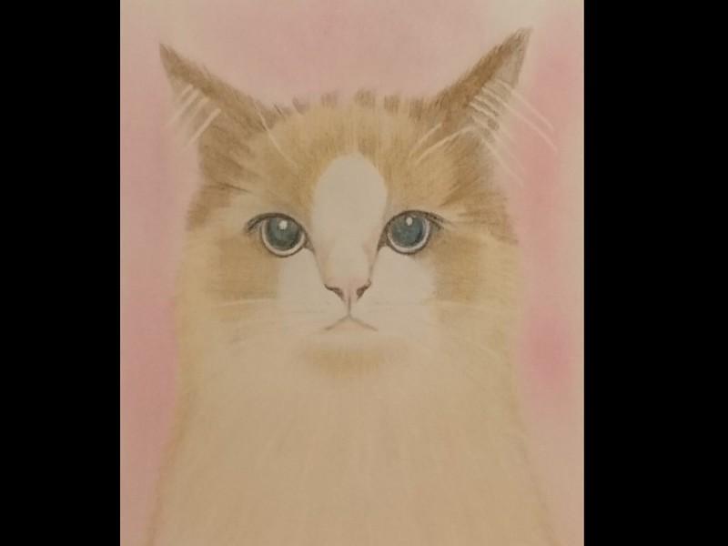 ★画材道具つきで簡単スタート★オンラインで猫の絵を描こう@ケント紙の画像