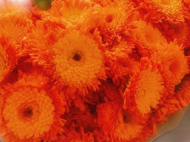 石けん作り初心者さんでもできる!カレンデュラのオレンジ石けんの画像