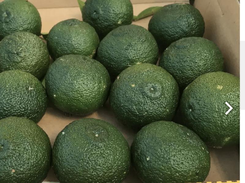 柚子こしょう つくろう♬  九州が誇る魅力の調味料の画像