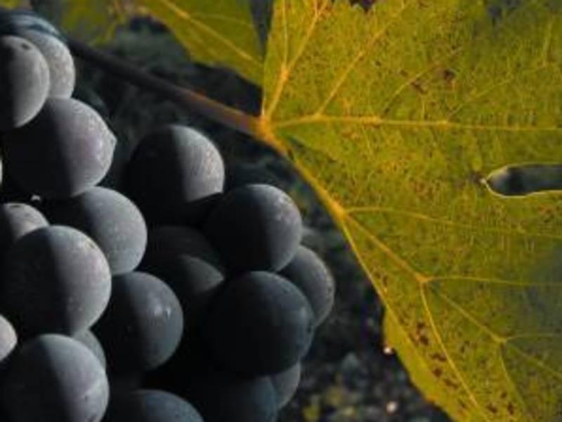 イタリア語でレッスン&ワイン講座 TrentinoAAdige編 の画像