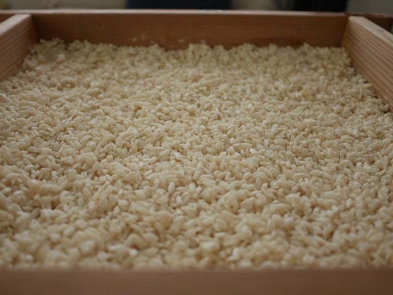 米麹作りオンラインワークショップの画像