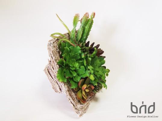 BUDフラワーレッスン2016年6月 多肉植物のボタニカルフレームの画像