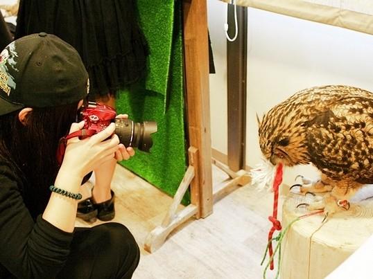 step2 フクロウがもふもふ、撮影体験 撮り方を学ぶの画像