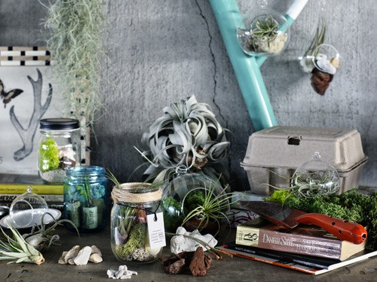 カスタムプランツ制作でアーバングリーンスタイルを発見の画像