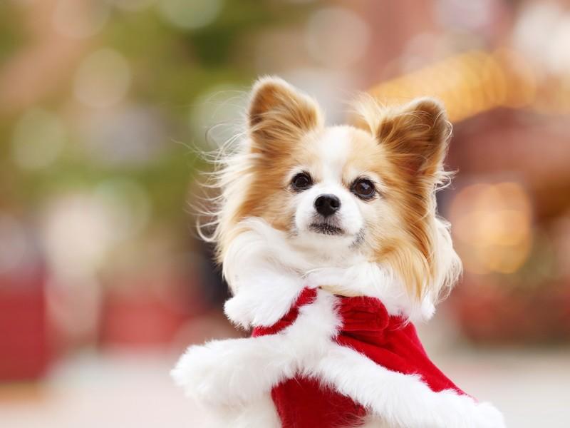 ドッグフォトグラファーと公園で愛犬を撮ろう!【中級者向け】の画像