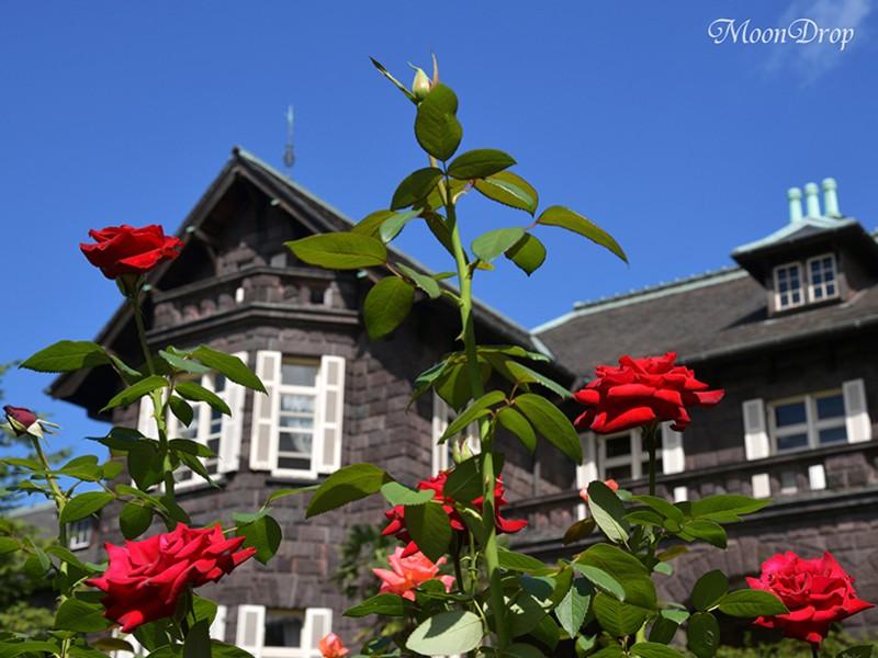 お写ん歩レッスン☆旧古河庭園で洋館とバラを撮ろう! の画像