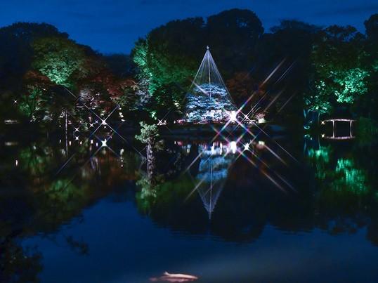 ♬幻想的な☆紅葉と大名庭園のライトアップ『駒込・六義園』で撮ろう♬の画像