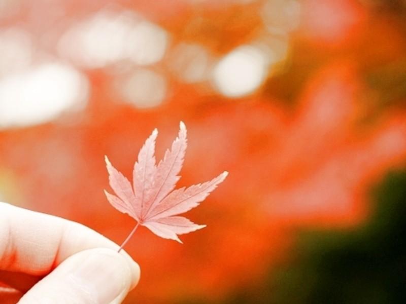 step2 季節限定 みんなで紅葉を撮ろう! 季節を楽しむの画像