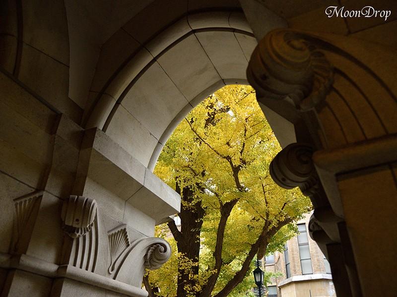 お写ん歩レッスン☆東京大学 本郷キャンパスを撮ろう!の画像