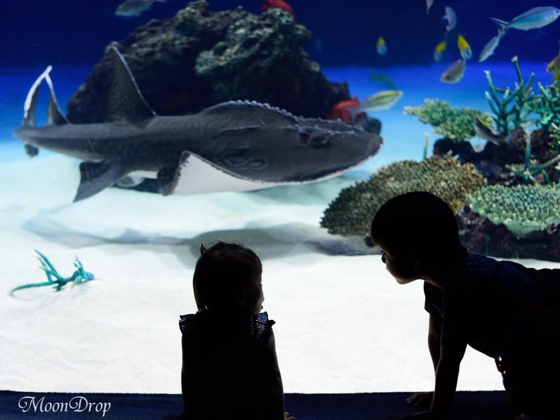 お写ん歩レッスン☆小さな動きものにチャレンジ!海の仲間を撮ろう。の画像