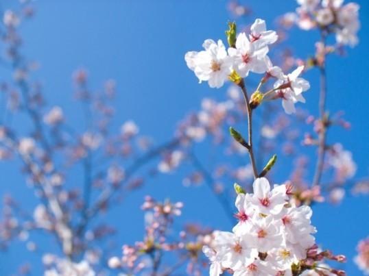 季節のふろしき 春のお出かけに役立つ風呂敷バッグ&四月卯月の歳時記の画像