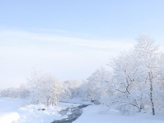2/25(土)あと1名様・雪に活ける花・不思議な溶けない雪で☆の画像