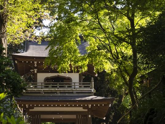 座禅&マインドフル・フォトウォーク in 鎌倉の画像