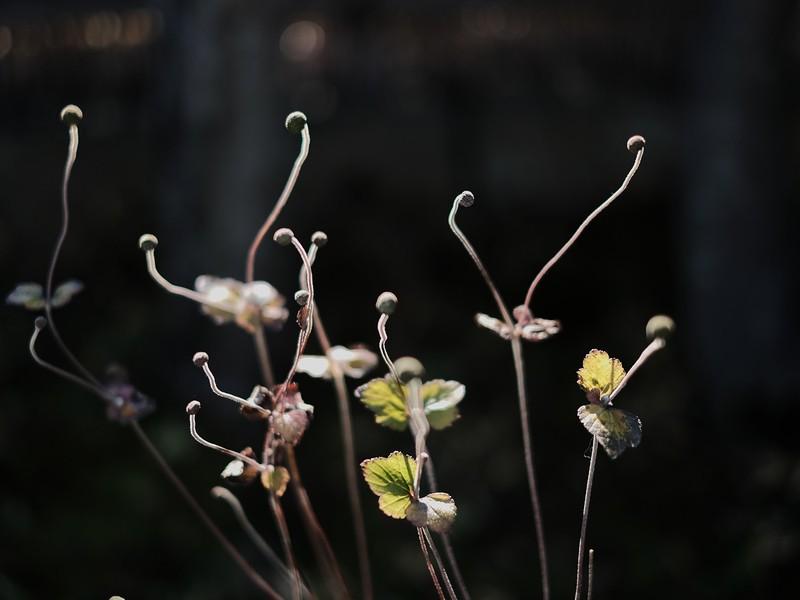 草花の撮影を楽しみながらミラーレス一眼カメラの初歩的な操作を学ぶの画像
