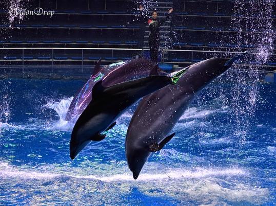 お写ん歩レッスン☆ゆらゆら七色クラゲやジャンプするイルカを撮ろう。の画像