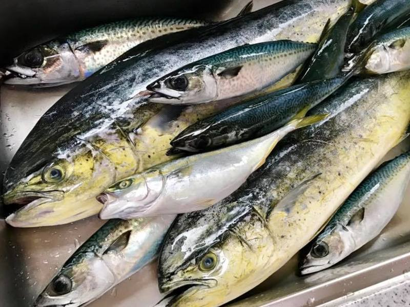 「地魚の袋詰め放題」してから、たくさん捌く料理教室!!!の画像