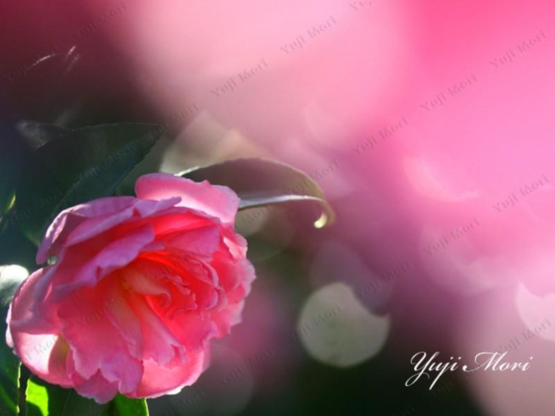 楽しめる花風景写真講座 基礎編の画像