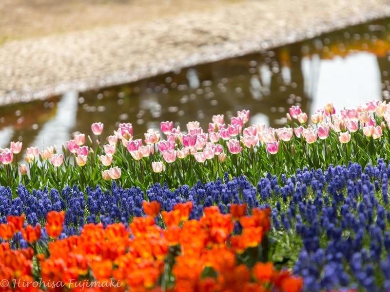 春の花を被写体に楽しく学ぶ、初心者向け写真教室@昭和記念公園の画像