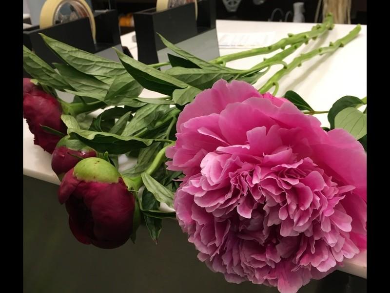 【初心者大歓迎】いけばな体験レッスン! 植物の美しいいけかたの画像