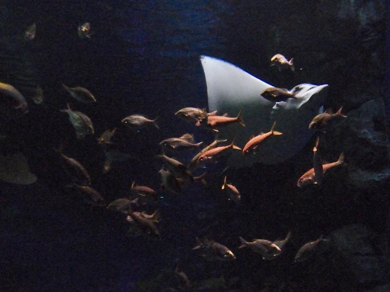 朝活!水族館で撮影会@品川アクアパークの画像