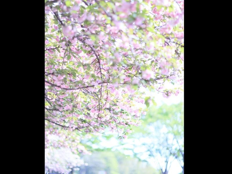 カメラは簡単♡たった2日で思い通りの写真が撮れるフォトレッスン♡の画像