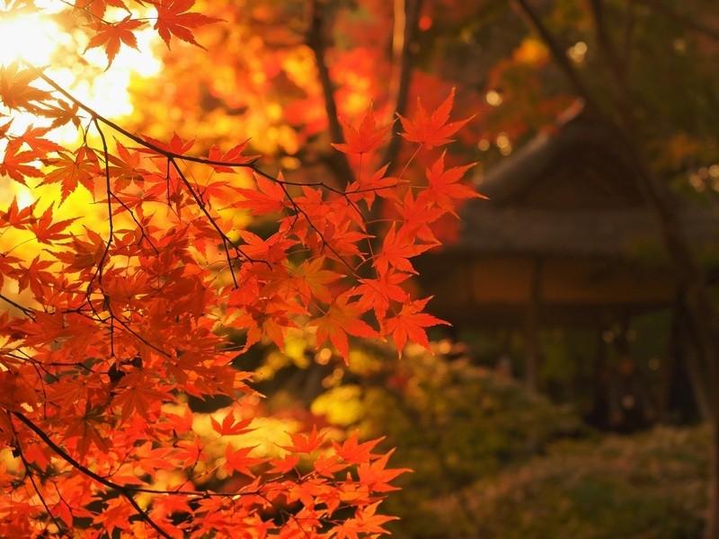 庭園を撮ろう! 六義園 四季の移り変わりを写真で楽しむ撮影会の画像