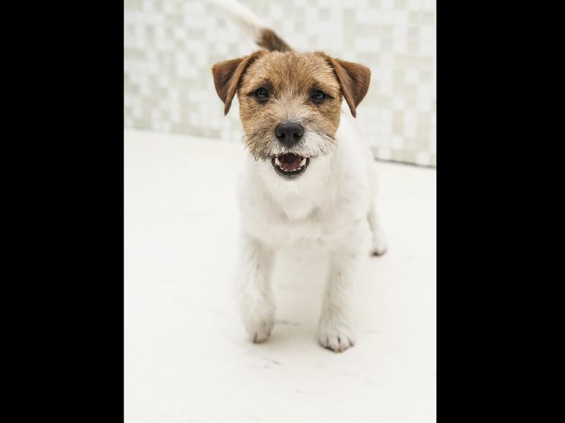 トリマーから愛犬のネイルケアを学ぼう!の画像