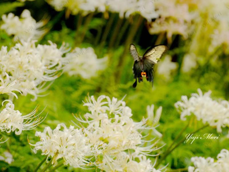 楽しめる写真講座  神奈川県大和市 大和の森 彼岸花 基礎編の画像