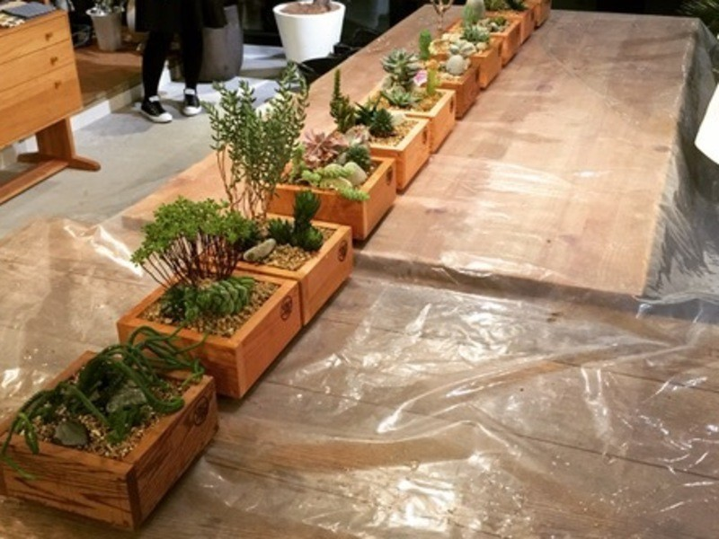 《多肉植物》寄せ植えワークショップの画像