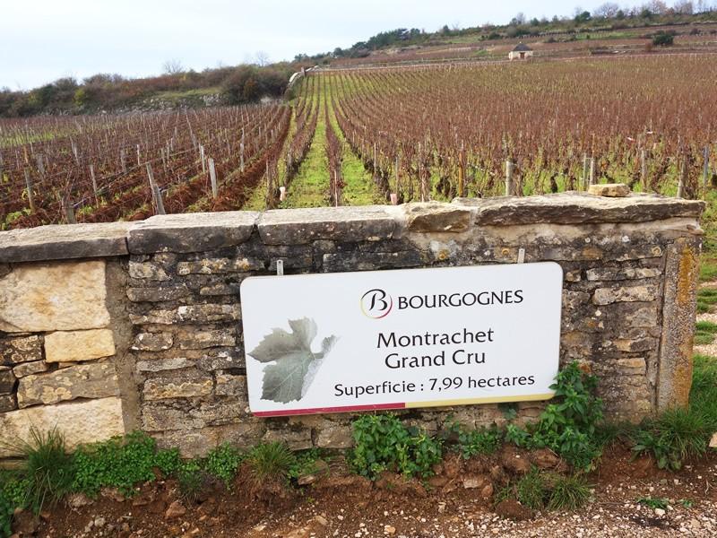 """やっぱり基本は""""フランスワイン""""~主要ブドウ品種:ビギナー向けの画像"""