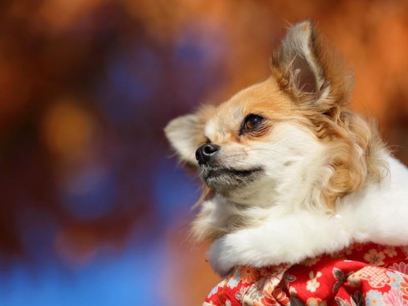 ドッグフォトグラファーと愛犬を撮り比べてみよう!【特別編】の画像