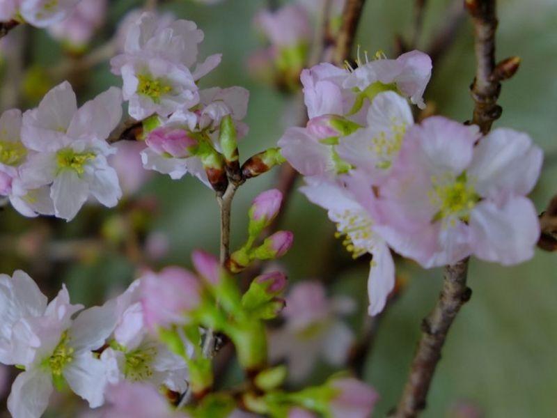 【手ぶらで参加OK!気持ちが潤う!】春のお花を楽しむ教室(桜編)の画像