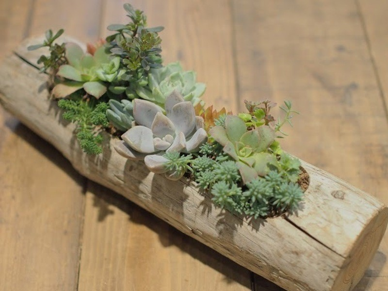 【tukuriba調布店開催】流木プランターの多肉植物寄せ植えの画像