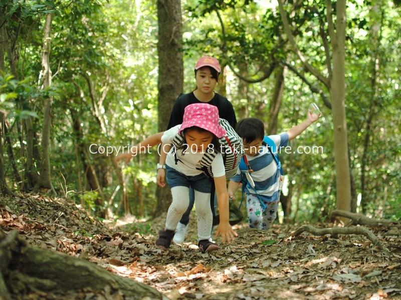 野外で子どもを育てる「森のようちえん保育者」養成講座の画像