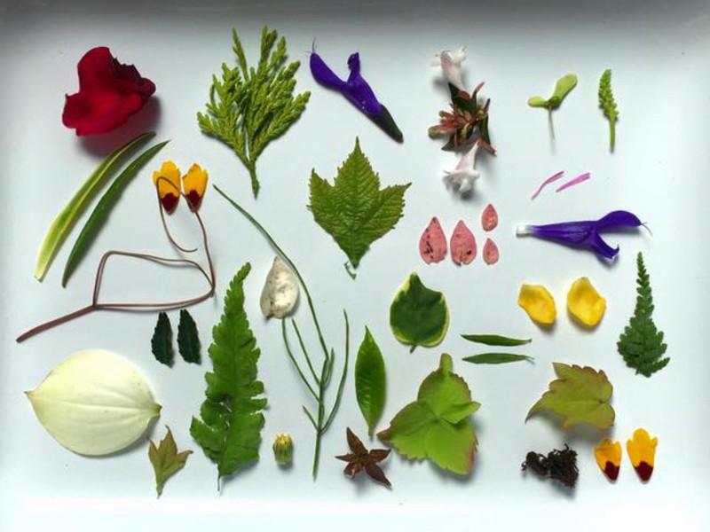 自然の美を感じて心を癒すアートセラピー講座の画像