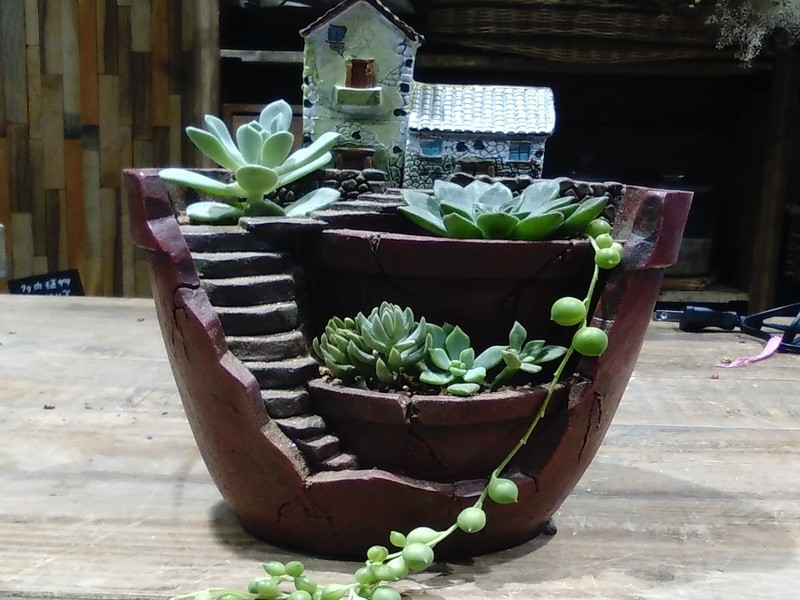 多肉植物の小さなお城の画像