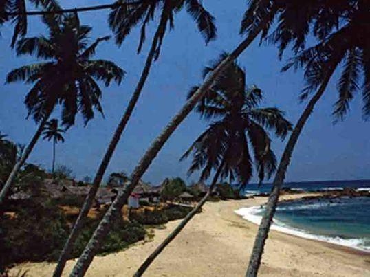人気上昇中のスリランカ、主要言語のシンハラ語を学びましょうの画像
