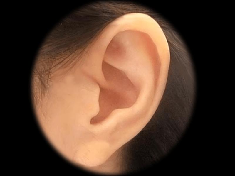 """【耳ツボで妊活】不妊治療を""""耳""""からサポート!の画像"""