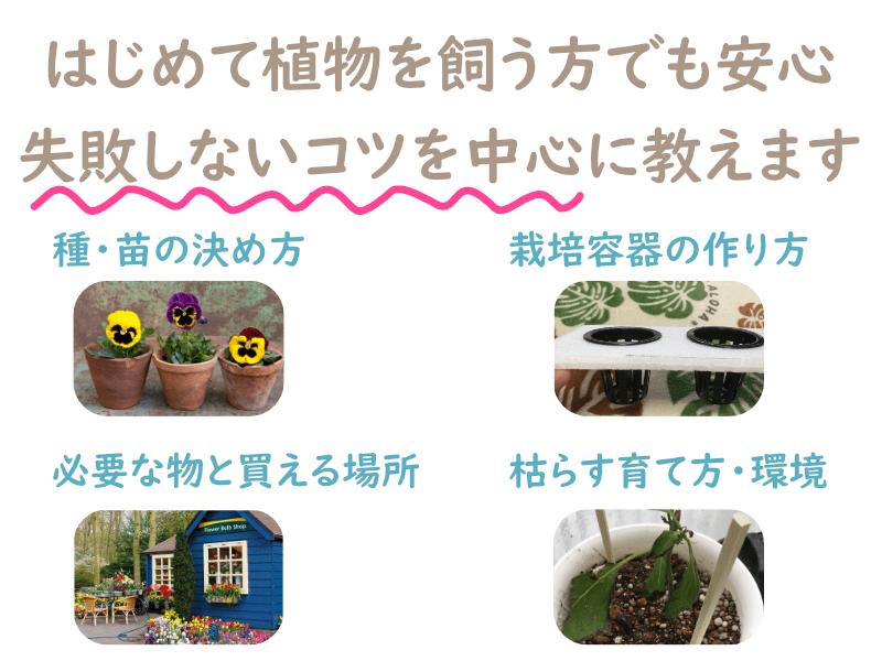 【もう植物は枯らさない♪】観葉植物より簡単・失敗しない水耕栽培入門の画像