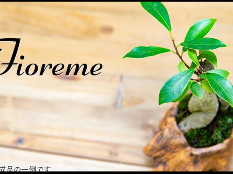 【手入れが簡単!】1年中緑が楽しめる観葉植物のミニ盆栽の画像