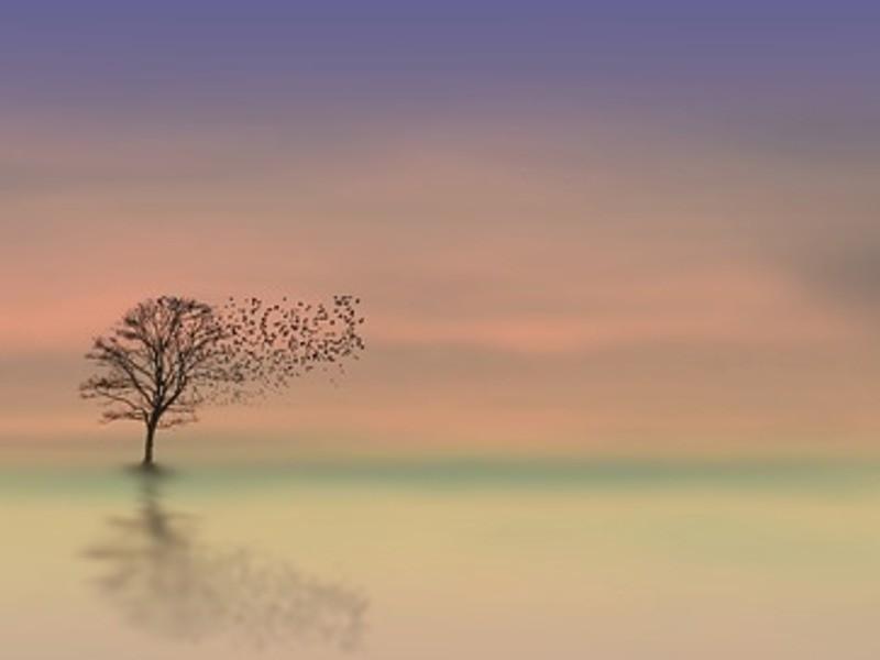自分を受け入れて願いを叶える瞑想ワークショップの画像