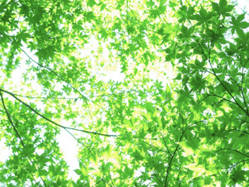 姿勢・呼吸・マインドフルネスの画像