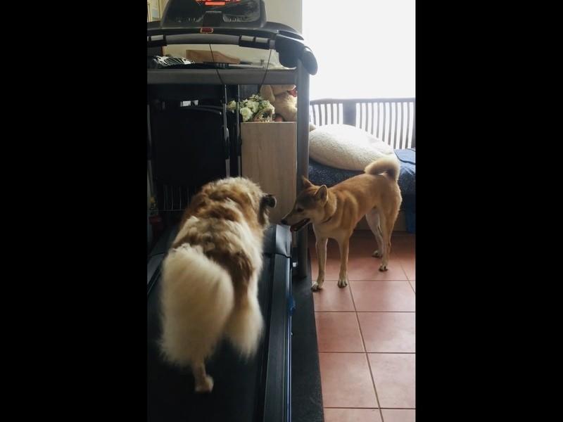 人と犬のmariage-method☆プロ飼い主養成♪集中講座編の画像
